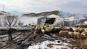 Kar çadırları çökertti, hayvanlar dışarıda kaldı