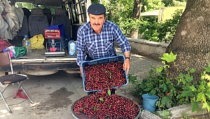 Akdere köyünde organik kiraz yetiştiriyor