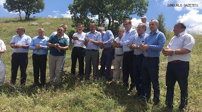 Sungurlu'da 200 keklik doğaya salındı
